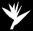 TLP Logo white